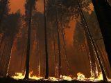 Через пожежі в російській Сибірі може згоріти Канада та Америка