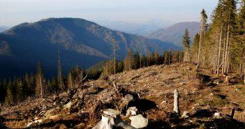 вирубка лісу карпати