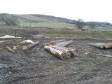 На Львівщині викрито нелегальну вирубку лісу на 1,5 мільйона гривень