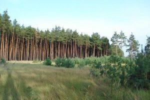 В Жовківському районі на Львівщині незаконно вирубали сосновий ліс