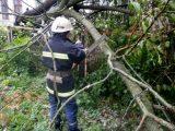 Через ранкову негоду у Львові впало два дерева