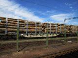 Москаль просить нардепів від Закарпаття голосувати за мораторій на експорт лісу
