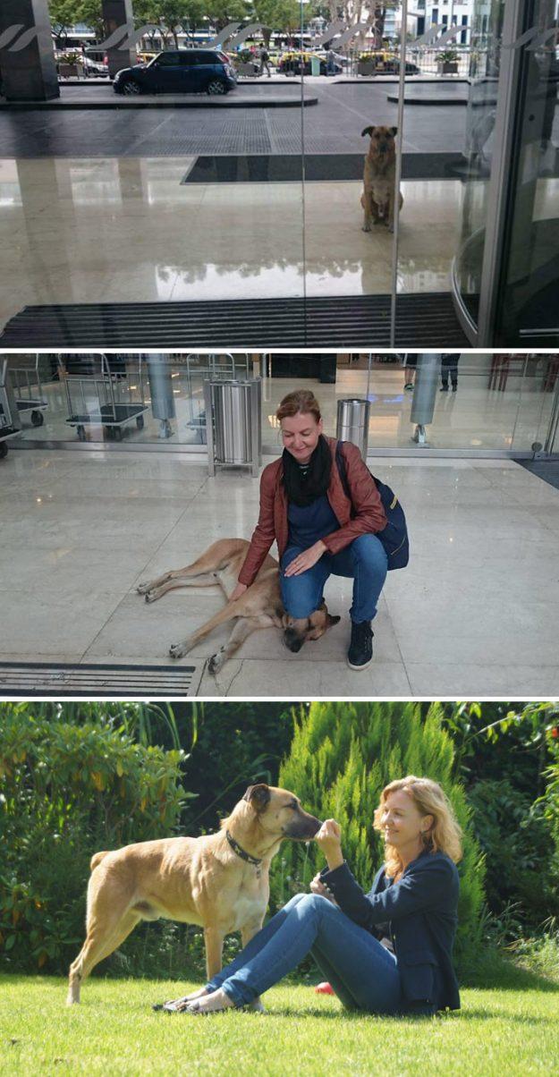 Собака чекала стюардесу біля дверей аеропорту кожен раз після прильоту. І дочекалася - жінка забрала її з собою.