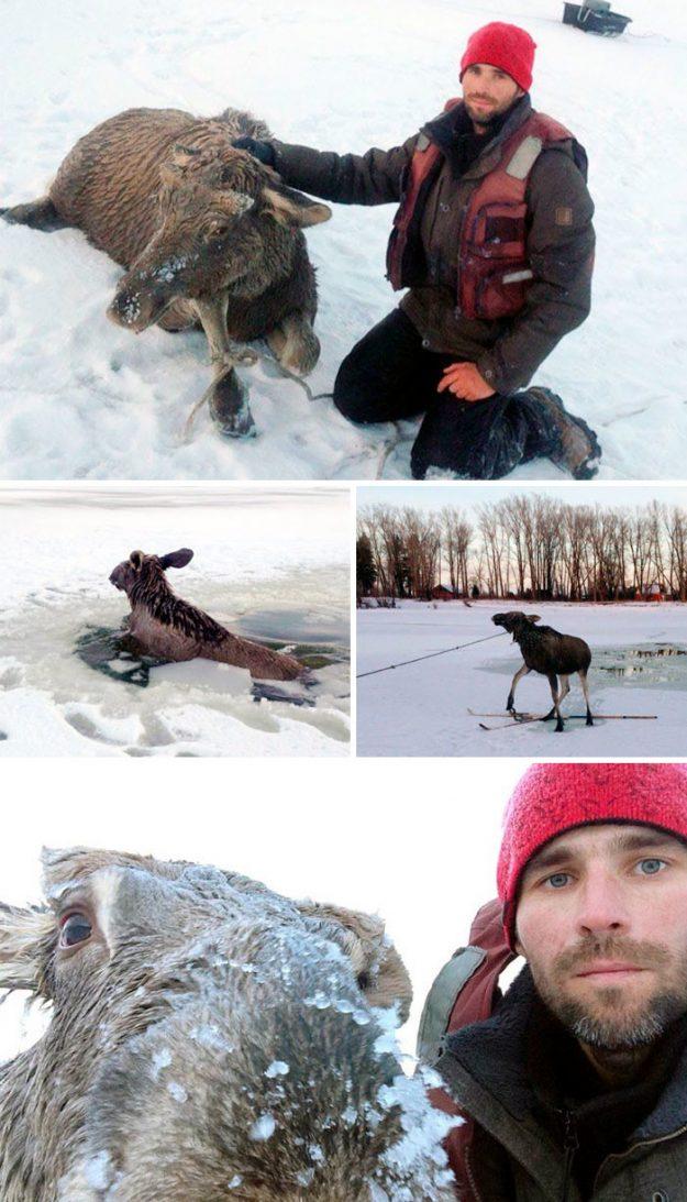 У Барнаулі рибалка врятував лосеня, який провалився під лід