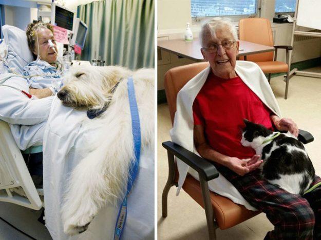 У деяких лікарнях людям похилого віку стали дозволяти побачення з їх тваринами