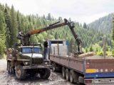 Новий сервіс Google допоміг оцінити масштаби вирубки карпатських лісів
