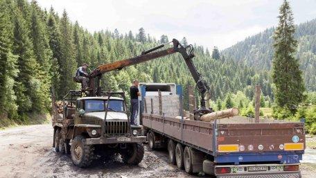 У Карпатах незаконна вирубка лісів досягла масштабів екологічної катастрофи