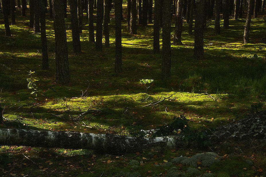 мохи у прибережному лісі
