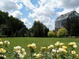 Ботанічний сад запрошує помилуватися квітами, кактусами та пальмами