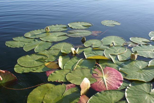 Озеро Чорне Велике