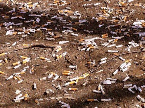 недопалки від цигарок