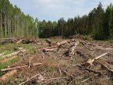 На Львівщині масово вирубують Карпати. У Facebook пропонують карати місцевих