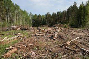 """""""Безліс"""": в мережі показали, як з України ешелонами вивозять ліс (відео)"""