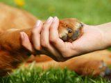 В Україні набув чинності закон про посилення покарання за знущання над тваринами