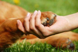 У Львові затвердили Правила утримання та поводження з домашніми тваринами. Усі подбробиці та нововведення
