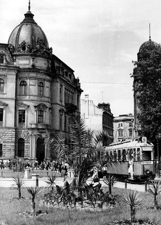 Пальми у Львові на сучасному проспекті Свободи