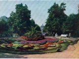 Історія львівських пальм