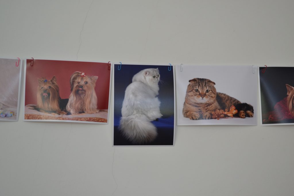 фотостудію для тварин «Art Pet»