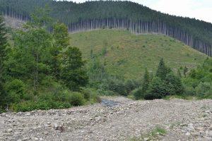 На Закарпатті готується масштабна вирубка лісу заради курорту: активісти просять про допомогу