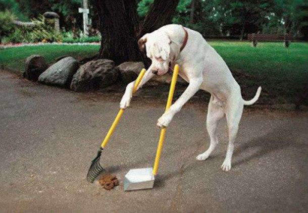 собаки екскременти штраф