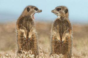 17 знімків фіналістів конкурсу на найсмішніше фото тварин. Нереальний позитив!
