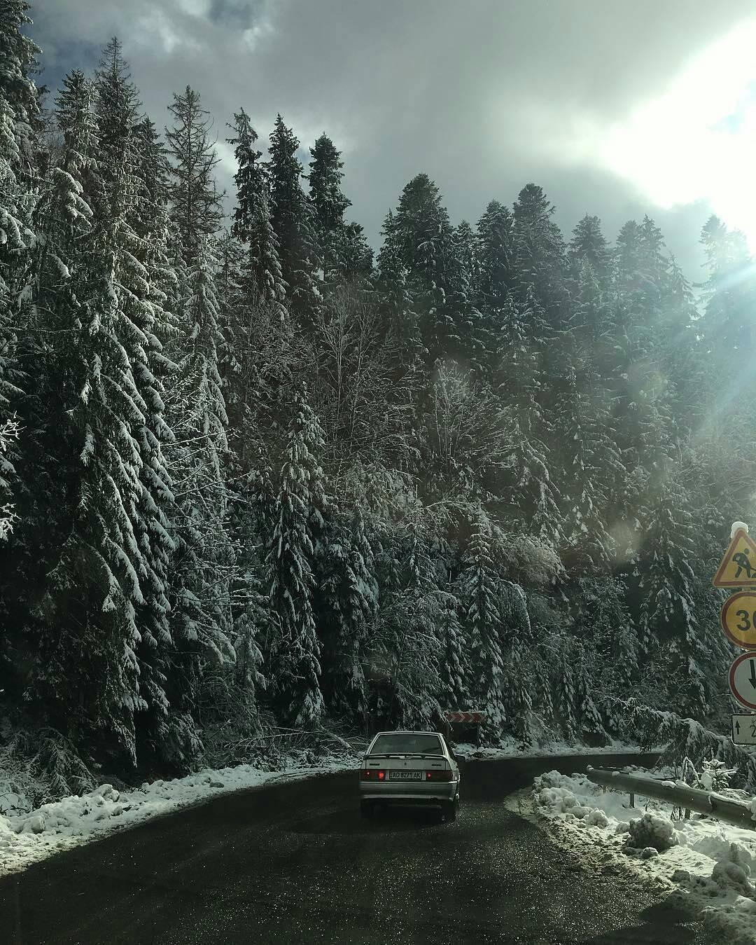 ліс зима