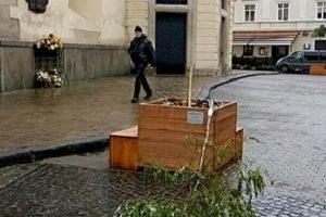 Камери спостереження зафіксували на відео зловмисників, які зламали дерево в центрі Львова
