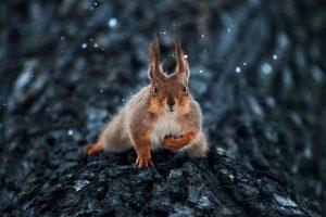 Український фотограф підкорив мережу дивовижними портретами тварин