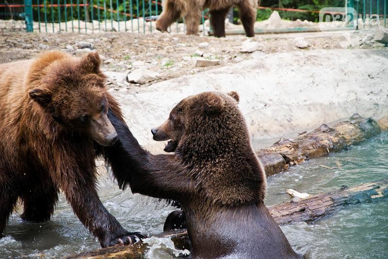 Реабілітаційний центр бурих ведмедів.