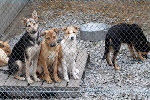 Львів'ян закликають допомогти собакам з притулку