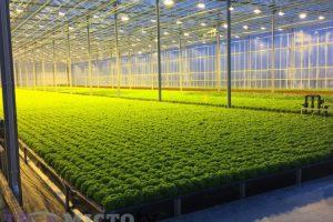 Море салатів, ліс помідорів. Як на Львівщині працює нідерландський агробізнес