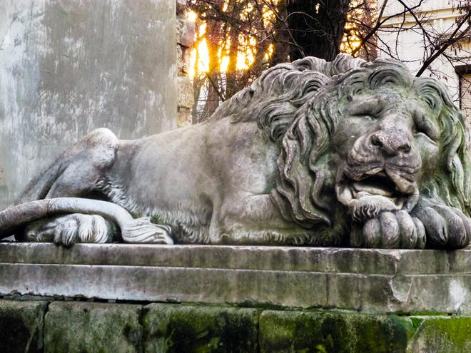 Відшукати львівських левів