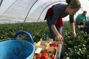 Не поїде тільки ледачий: Польща заманює заробітчан новими пільгами