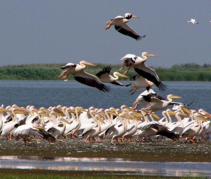 На фото: Дунайський біосферний заповідник