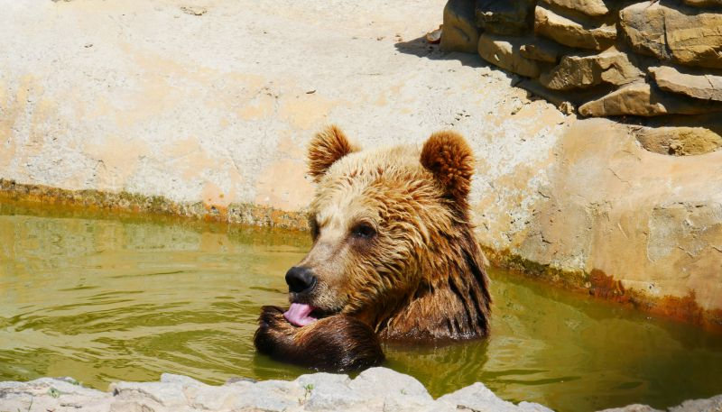 На фото: ведмідь у центрі реабілітації «Надія»