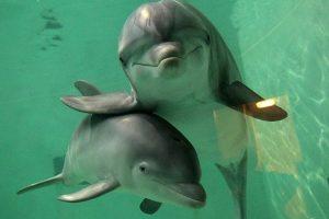 На Львівщині пожежники рятували дельфінів