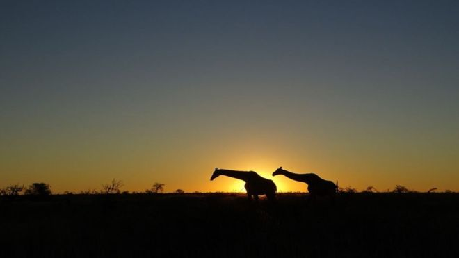 Дикі тварини зустрічалися дорогою в Намібії досить часто