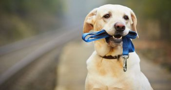 собака повідок