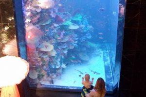 У Львові відкрили ресторан з живими акулами та скандалами. Фото