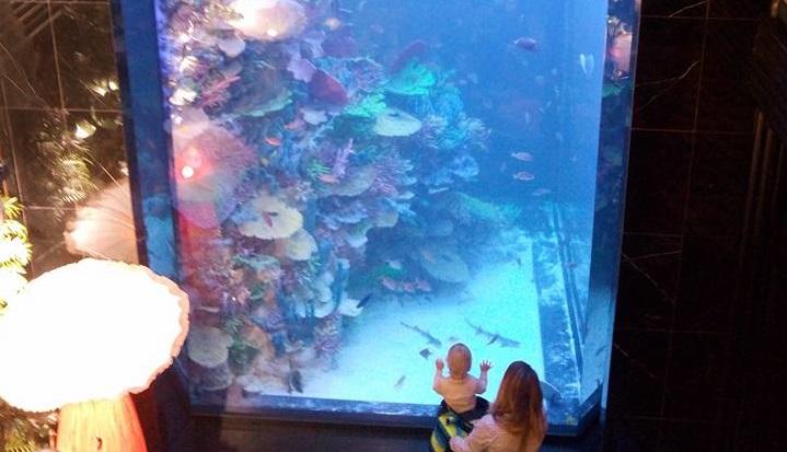Аквалангіст занурюється в акваріум, щоб з рук погодувати акул...