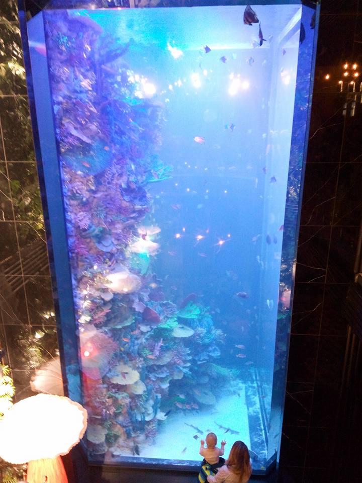 Восьмиметровий акваріум вражає відвідувачів