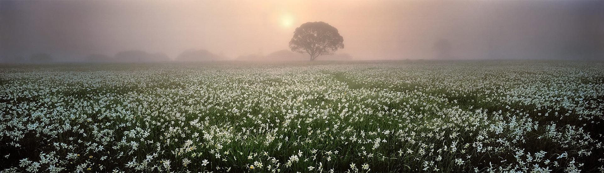 Закарпаття, Долина Нарцисів (фото: Роман Михайлюк)