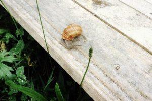 Слизький бізнес: перша равликова ферма на Закарпатті запрошує на дегустацію