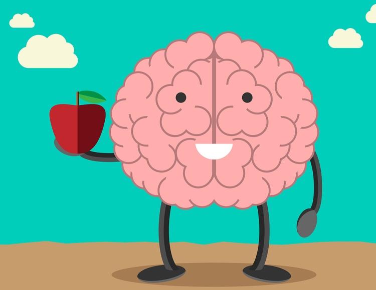 Мозок споживає 20% нашої загальної енергії