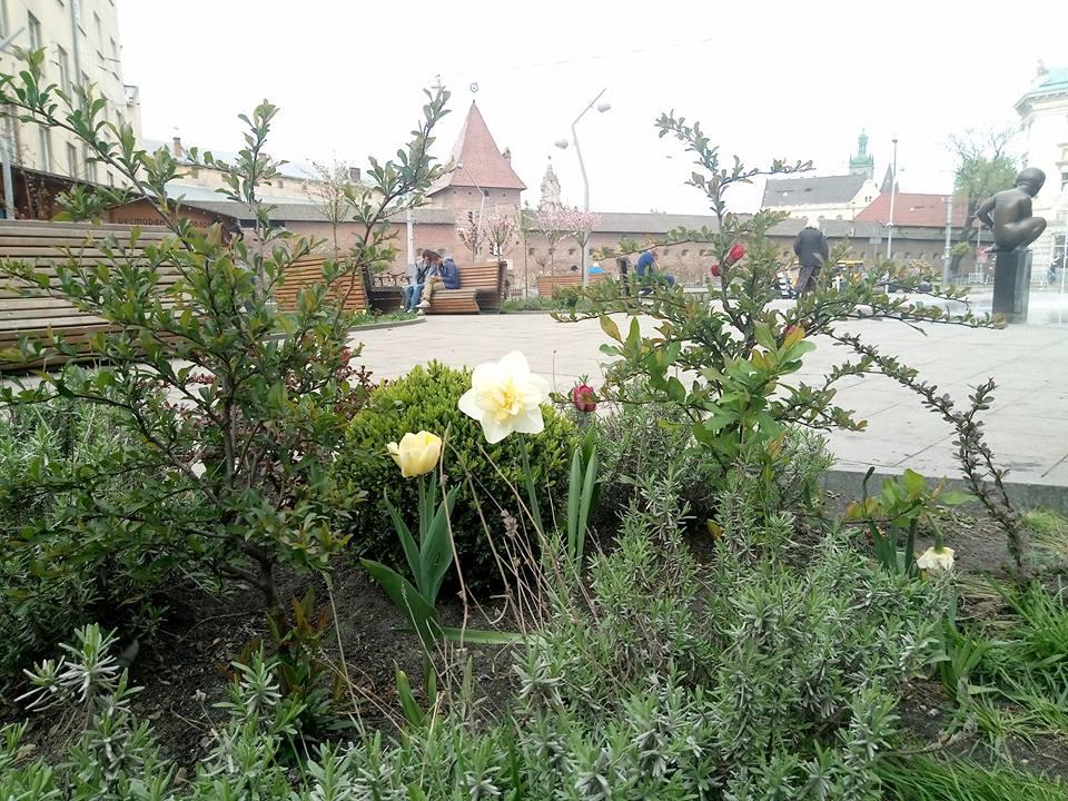 Площу митну засадили квітами. Фоторепортаж