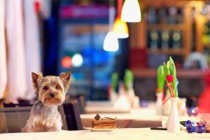 Бари, ресторани та паби: 10 закладів Львова, в які можна прийти з собакою