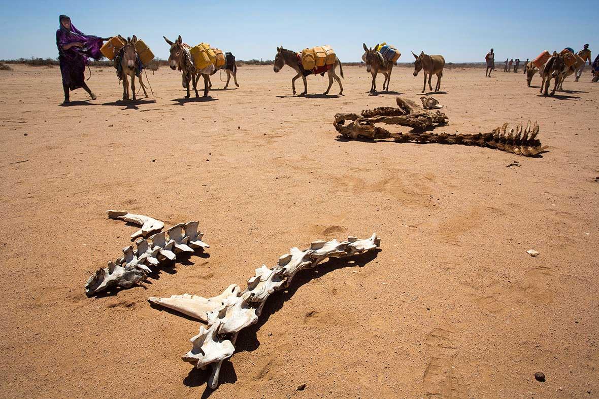 1. Наслідки посухи біля Харгейси, Сомаліленд.