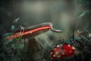 Казка – поруч! Український фотограф знімає фантастичне макро (ФОТО)