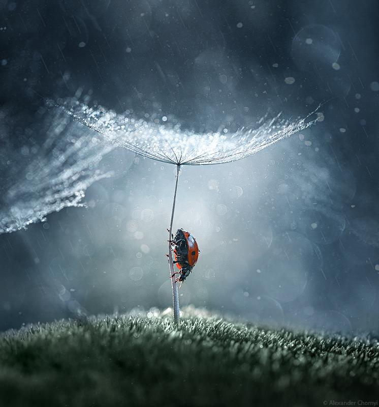 Казкова реальність. Український фотограф знімає фантастичні макро-знімки (ФОТО)