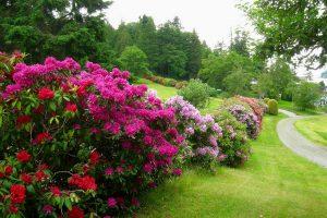 Львівський ботанічний сад кличе на День відкритих дверей
